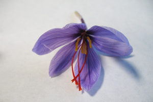 Unraveling the chemical mystery of saffron