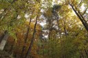 Biodiversity does not always improve resistance of forest ecosystems to drought