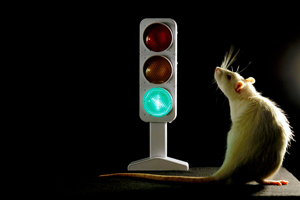 Traffic Light in the Brain