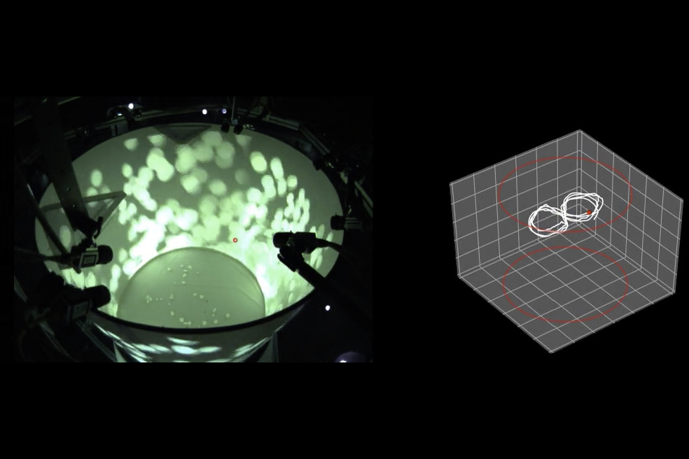 A holodeck for flies, fish and mice