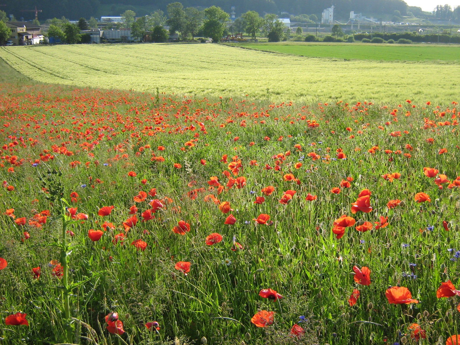 Global biodiversity in crisis - what can Germany and the EU do about it?