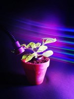 Controlling plant processes with light