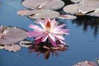 Wasserkreisläufe verstehen und Blumentöpfe bemalen