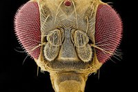 Was im Kopf einer Fruchtfliege vor sich geht