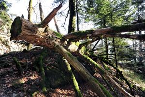 Biologische Vielfalt in Wäldern Mitteleuropas erhalten
