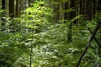 Woodlands in Europe: more tree species, more benefits