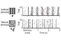 Neuronale Schaltkreise für natürliches Sehen