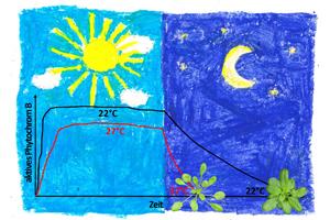 Wie Pflanzen die Temperatur messen