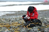 Überlebenskünstler in der Antarktis