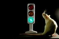 Traffic Light in the Brain