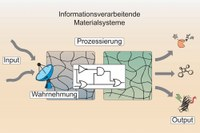 Biological signalling processes in intelligent materials