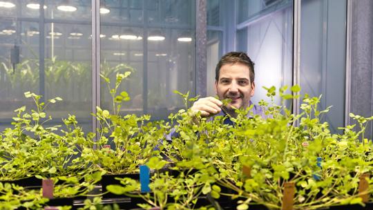 Grüne Revolution für Getreide