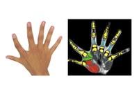 Sechs an einer Hand
