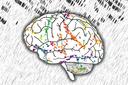 Das Raum-Zeit-Gefüge im Gehirn