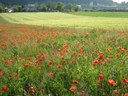 Globale Biodiversität in der Krise - Was können Deutschland und die EU dagegen tun?