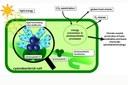 Bisher übersehene kleine Proteine in Bakterien