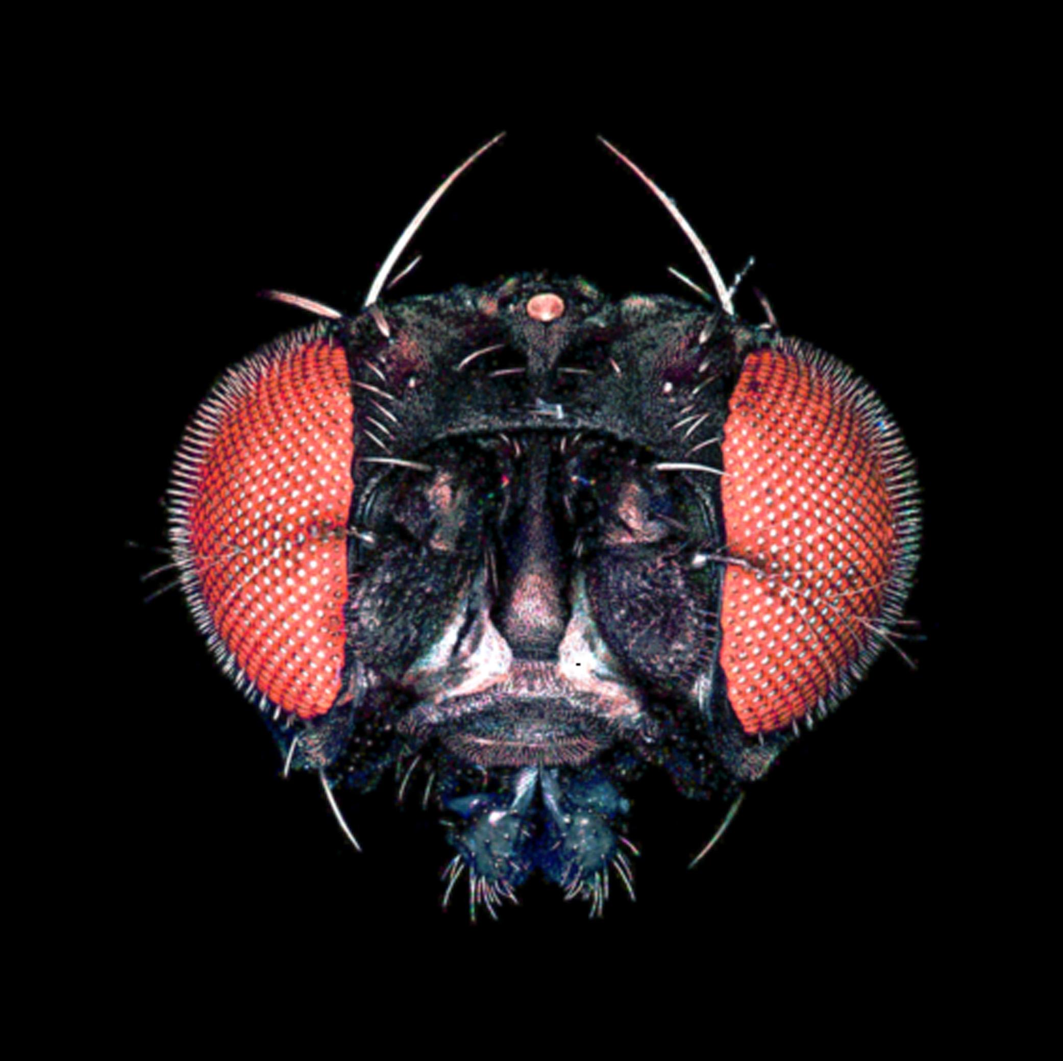 Wie Insekten Farben sehen