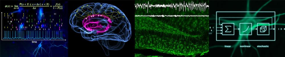 Studium Neurowissenschaften